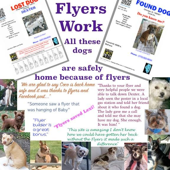 Flyers are the NUMBER ONE way that lost dogs are reunited with their owners (not social media). When you file a report with our partner Helping Lost Pets you will be able to choose from different flyer templates to fit your situation.   Lost Dogs of California partners with HelpingLostPets.com to get more pets home. If you would like to receive alerts for missing/found pets listed in your neighborhood, you can join for FREE: www.HelpingLostPets.com/ALERTS