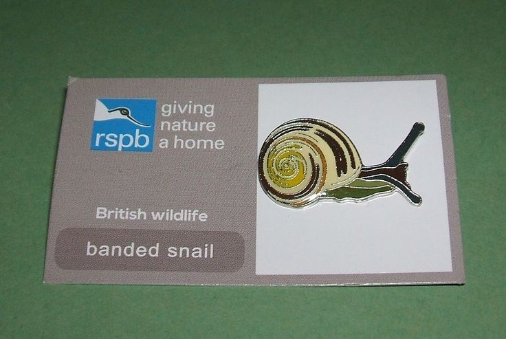 RSPB Banded Snail GNH.
