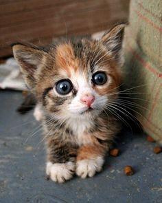 Dessa underbara kattungar!