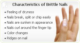 Brittle Nails: Like many of the menopausal symptoms caused by the imbalance of hormones, brittle nails can be restored by following a healthy diet and exercise regimen: 1) Wear gloves when doing the dishes, 2) Biotin, 3) Soak your nails in oil, not water, 4) Eat good fats, 5) Calcium. Additionally, there are some herbs and alternative treatments available that can help restore nail health.