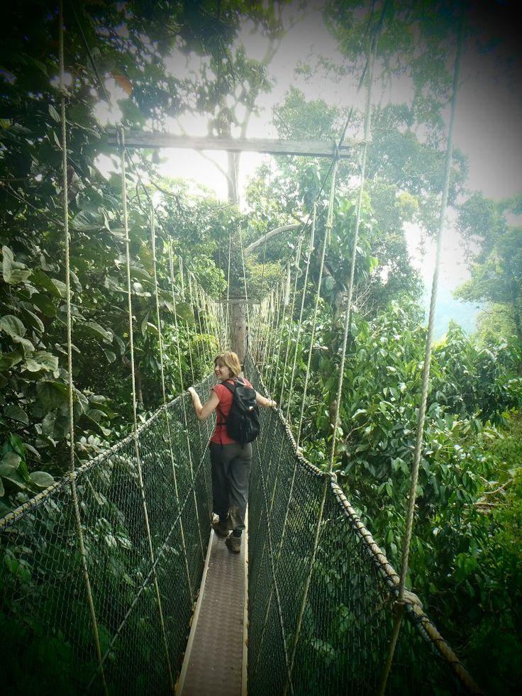 Kanopy Walk jungle au Taman Negara, Malaisie