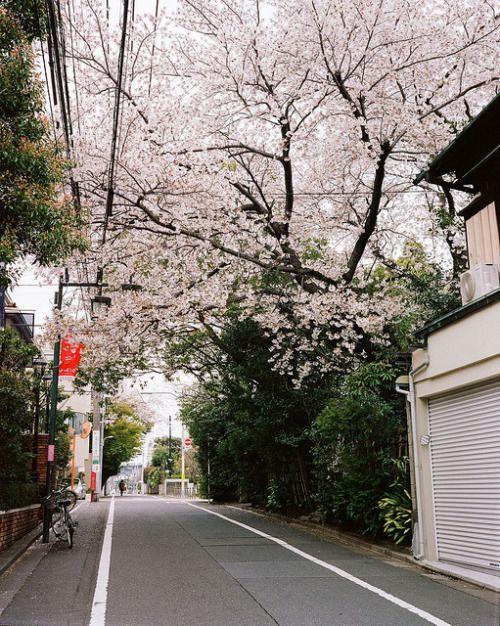 Tokyo Street by BERT DESIGN