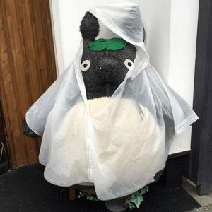 Totoro on a rainy day in Dazaifu, Fukuoka