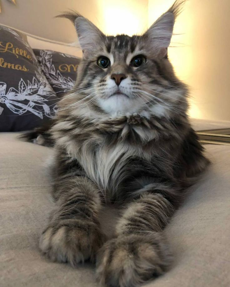 Furoll™ Pet Hair Removing Roller Pets, Cat water