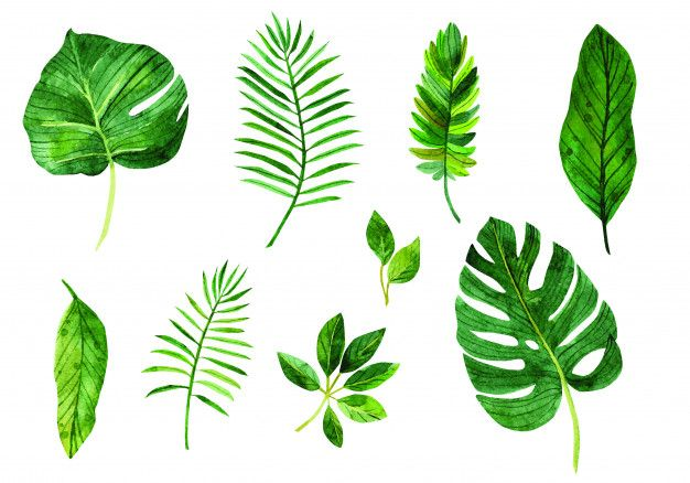 Set Leaves In 2020 Vector Free Tropical Leaves Plant Leaves