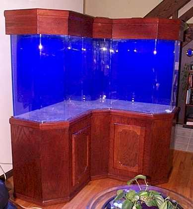 Salt Water Tank
