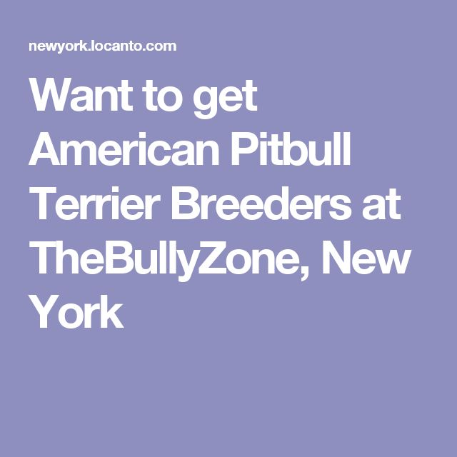 Want to get American Pitbull Terrier Breeders at TheBullyZone, New York