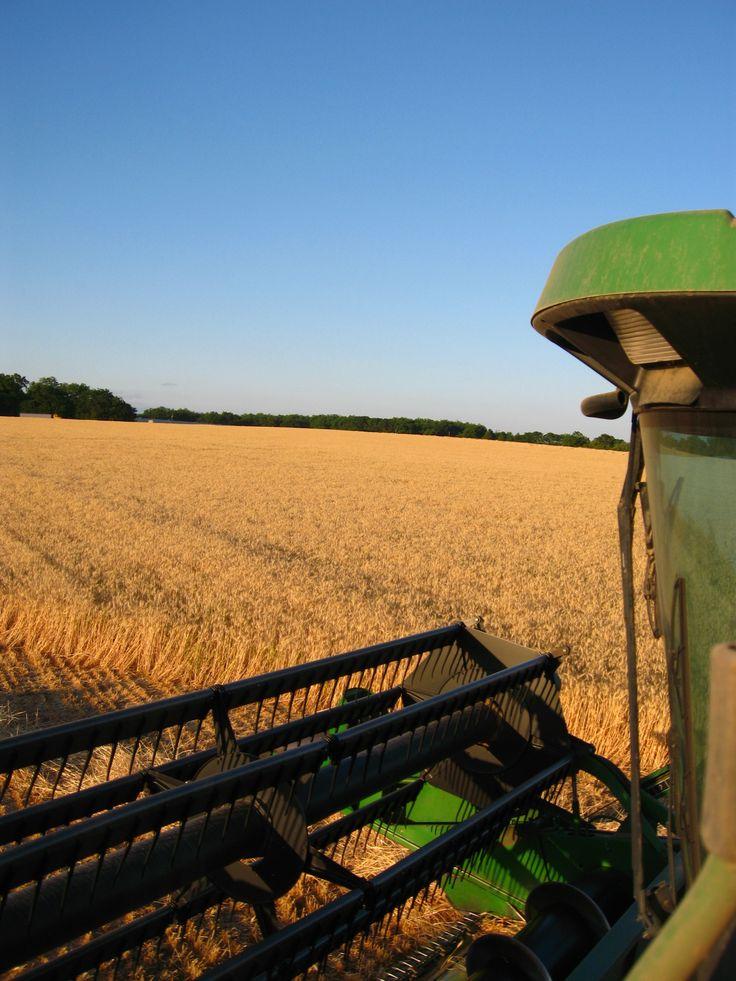Georgia Farm Wheat Harvest