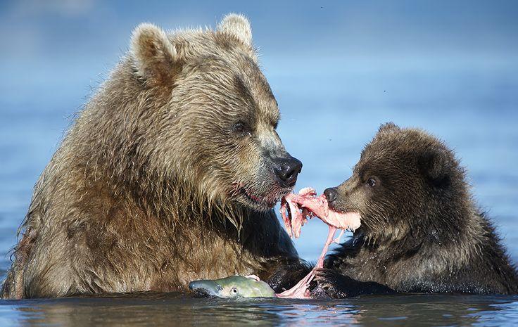 Когда я ем - Дикая природа России.