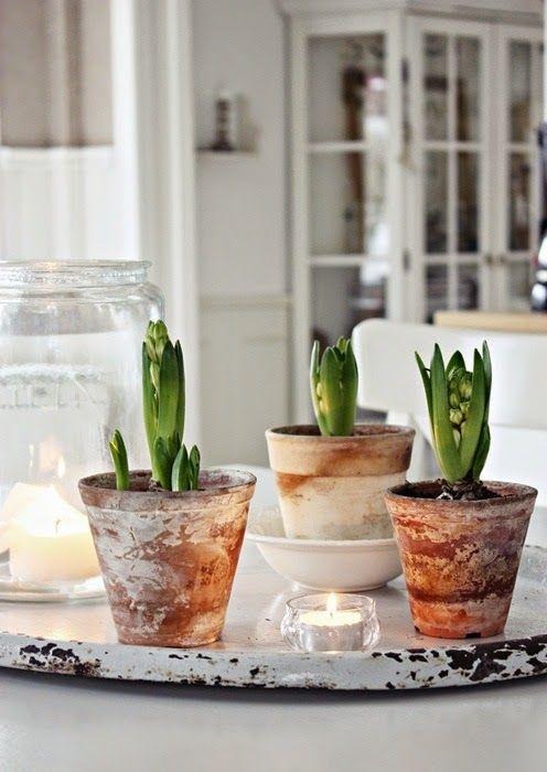 33 Best Pots Images On Pinterest Gardening Potted