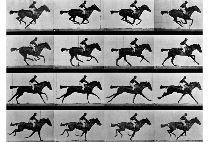 In Motion by Eadweard Muybridge