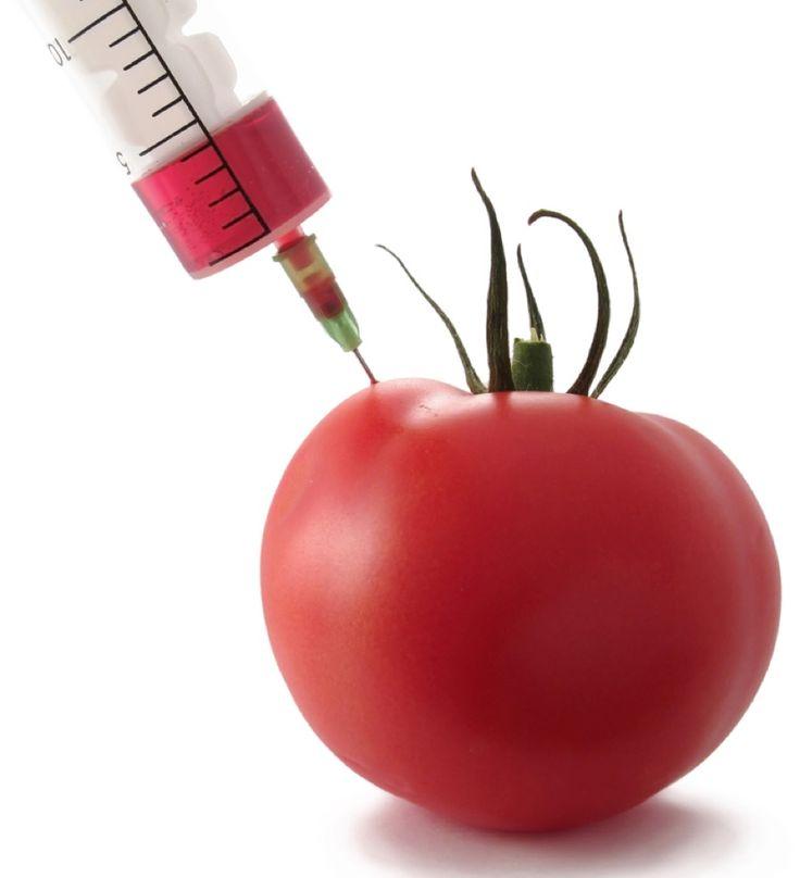 Γενετική διαστροφή στην διατροφή: Ντομάτες μακράς διαρκείας!