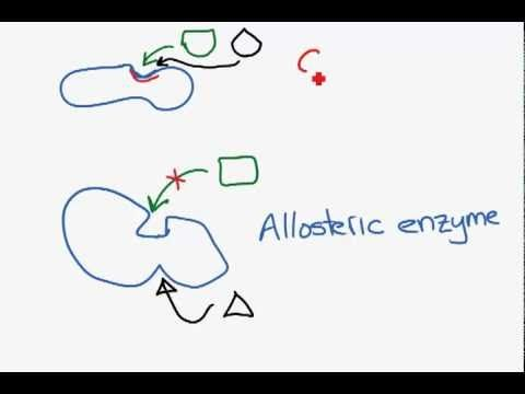 Competitive and non-competitive inhibition.mp4 - YouTube