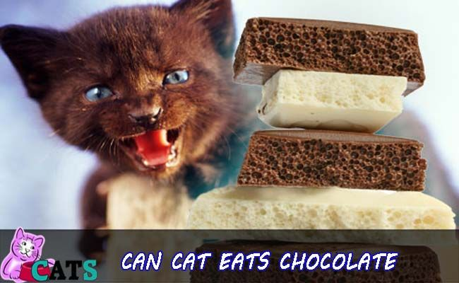 can cats eat chocolate know more about what cat can eat    #Catfood #cat #catsofinstagram #cateatchocolates #catholic #catsofinstagram