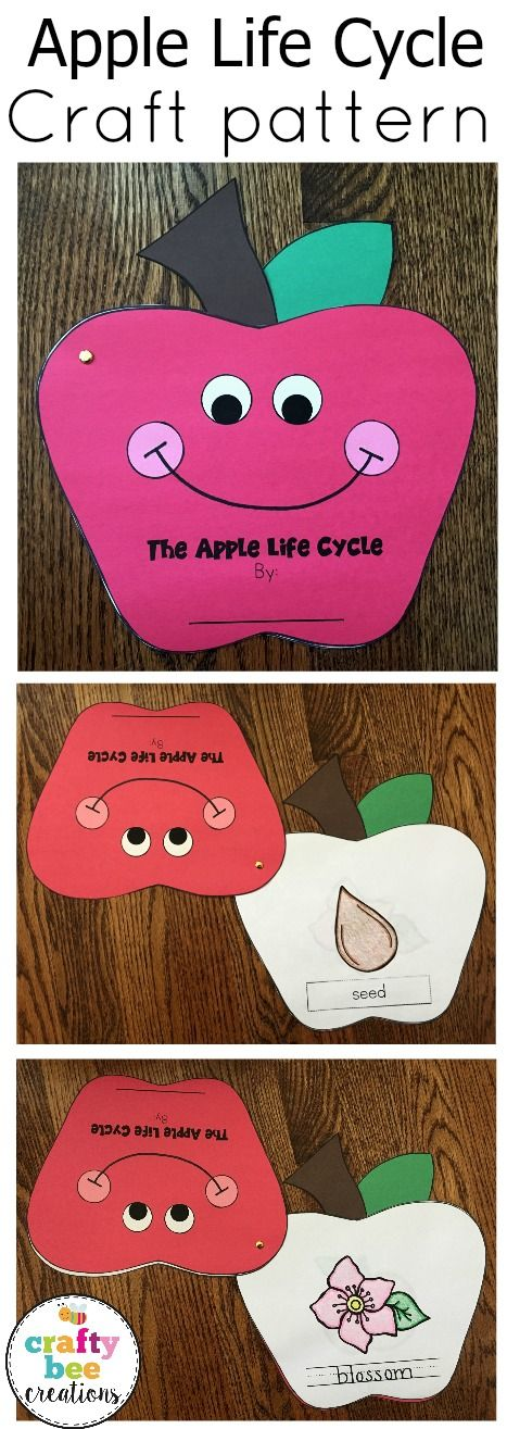 Apple Life Cycle craft that has worksheets and pictures that will help kids learn about the cycle.  Craft reinforces learning.