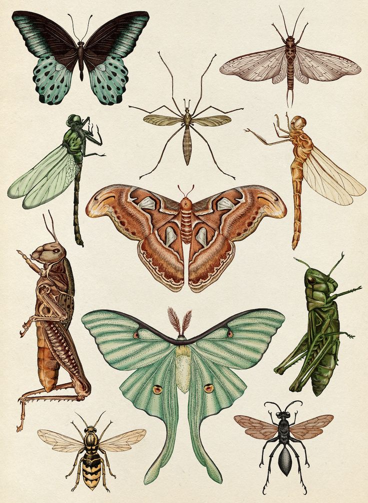 The Vintaquarian, katie-scott:   Flying Insects  From Animalium,...