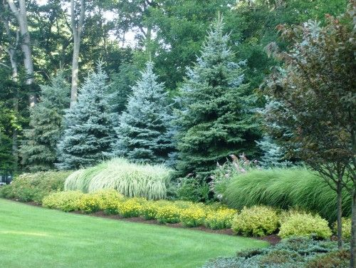 I like the large evergreens with the graceful grasses in front.  The yellow shrubs in front add to the color combination.
