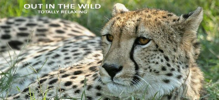 Spot Cheetah at Mount Camdeboo Private Game Reserves near Graaff-Reinet in the Eastern Cape #Sight2SeeInTheKaroo
