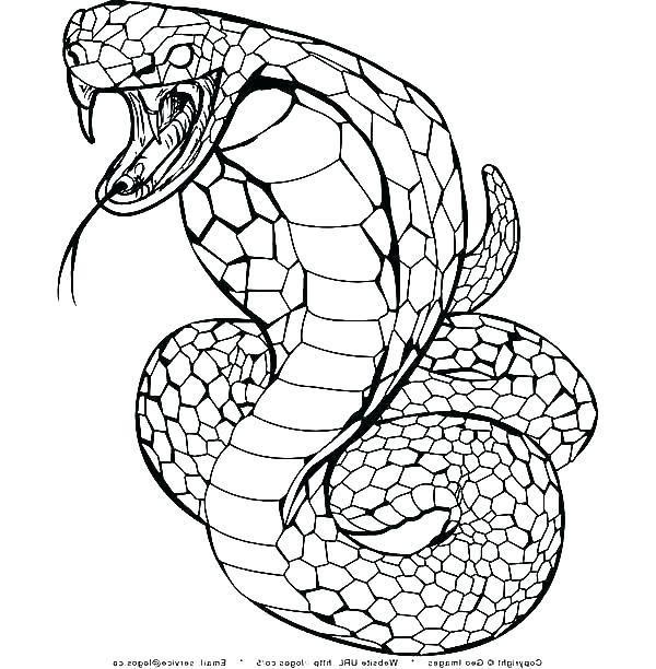 Western Diamondback Rattlesnake Coloring Pages Ball Python Coloring Snake Coloring Pages Animal Coloring Pages Coloring Pages