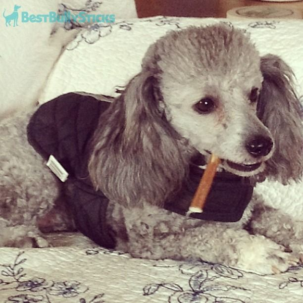 pin by best bully sticks on bbs featured dogs pinterest. Black Bedroom Furniture Sets. Home Design Ideas