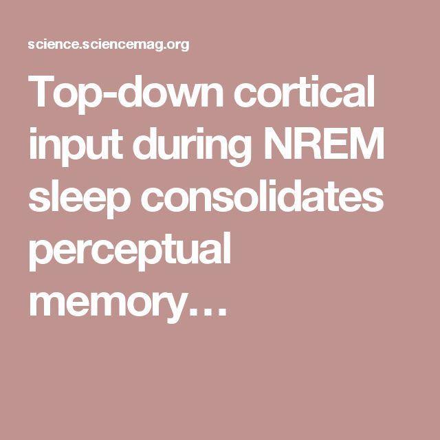 Top-down cortical input during NREM sleep consolidates perceptual memory…