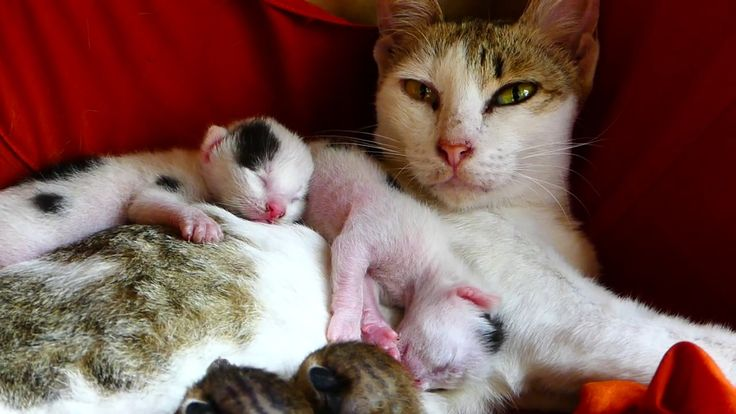 Mom Cat Just Give New Birth Four Babies