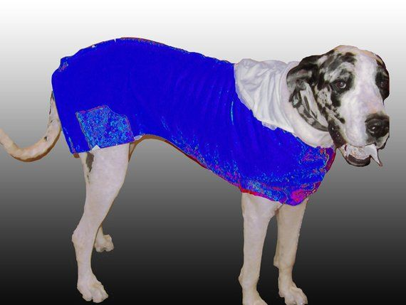 Bright Royal Blue And White Great Dane Giant Poly Sweatshirt