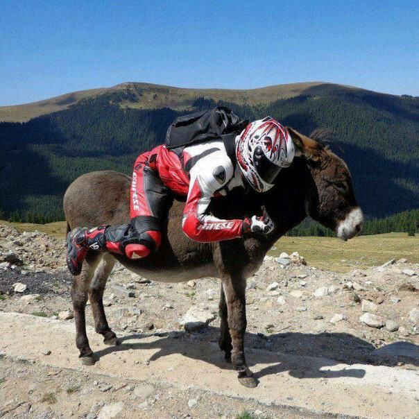 Leonie Mare (@leoniepragtig) | Twitter  Arrive Alive @_ArriveAlive Sep 15  To Ride or Not to Ride a Motorcycle?