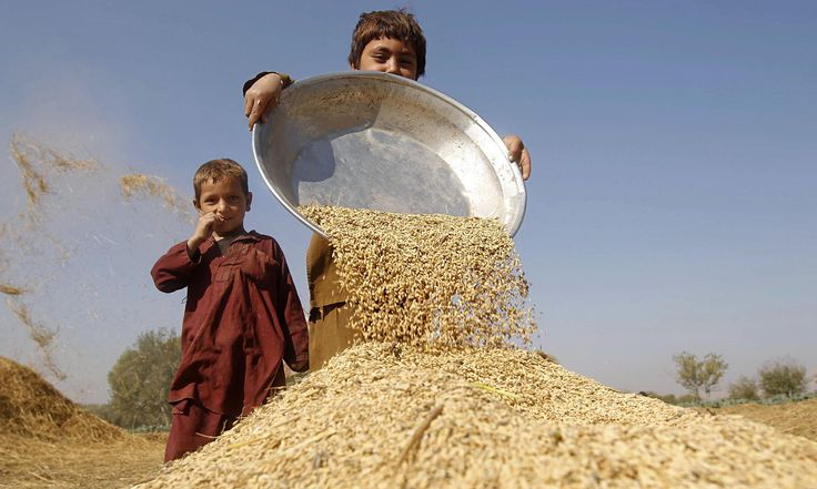 Global food security: could wheat feed the world?