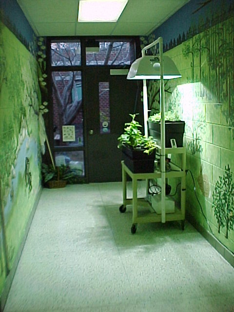 9 Best Images About Hydroponics In Schools On Pinterest