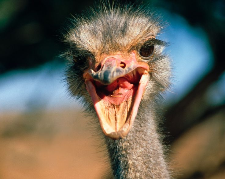 Get my 7 FREE basic photography tips - you NEED to know right here; http://pw5383.wixsite.com/free-photo-tips | Photographer Pernille Westh | Ostrich