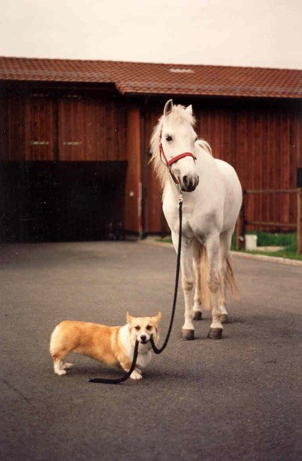 We hired a Professional Pet Sitter to check in on the horse while we took a vacation.  We mistakenly assumed the professional would be a human.  No wonder he wanted to be paid in cheeseburgers!