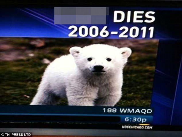 News of the death of Berlin Zoo's popular polar bear Knut, ended up in an offensive word being broadcast when his name was spelled incorrectly