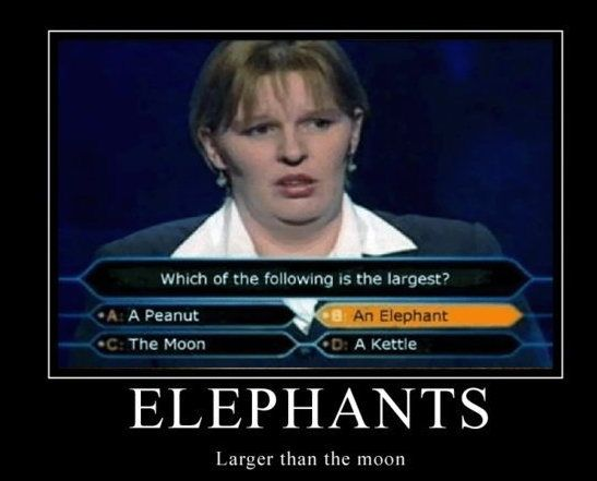 Wow.... where she's from they must have B I G elephants!!