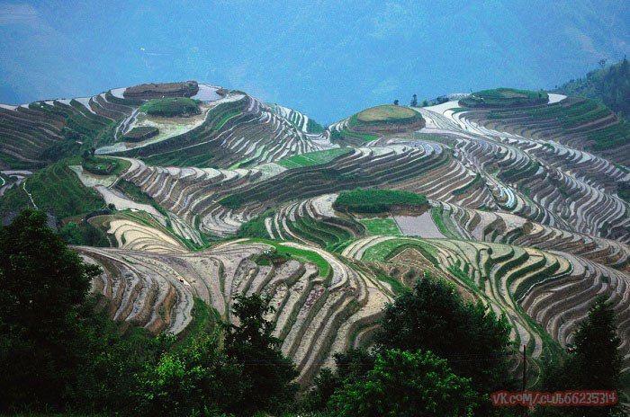 Рисовые террасы Луншэна, Китай. Вид рисовых террас изменяется в зависимости от времени года. Весной, когда вода орошает рисовые поля, террасы выглядят как большие блестящие ленты, обвивающие склоны гор и холмов. / The rice terraces of Longsheng, China.