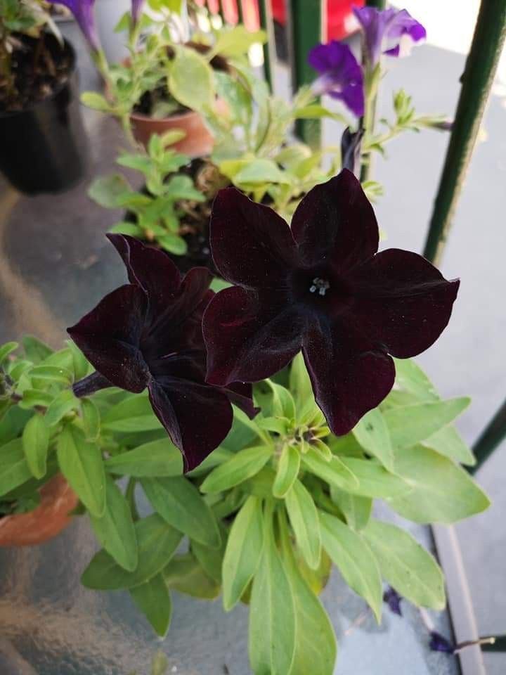 Brown Flowers In 2020 Brown Flowers Flowers Plants