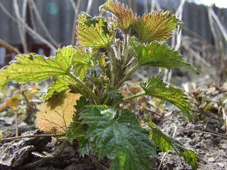 Травы жизни: Лекарственные растения. Суперполезные весенние сал...