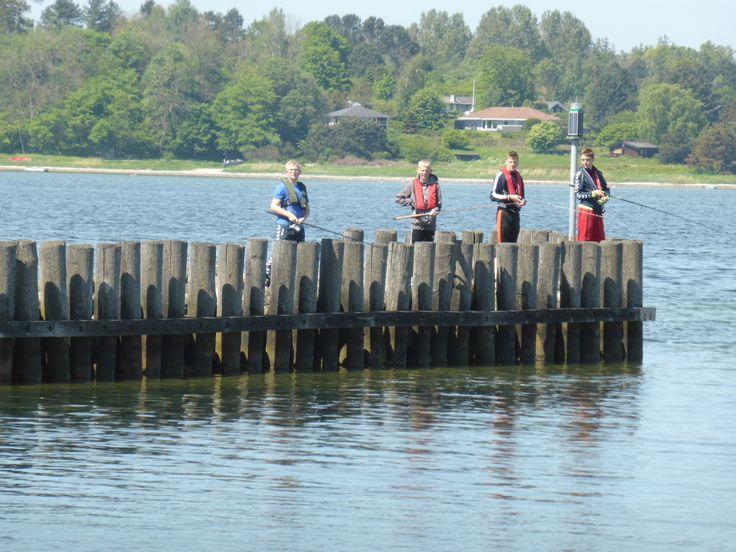 Fiskeri i fjorden