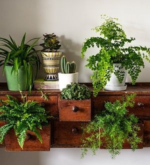 From left: spider plant in Serax green pot (£9, trianglestore.co.uk). Jade plant in Kerio pot (£28, anthropologie.eu). Cactus in Portland planter (£24, trianglestore.co.uk). Maidenhair fern in Hay pot and saucer (£19, nookshop.co.uk). In drawers: Boston fern, turtle vine, sprenger asparagus.