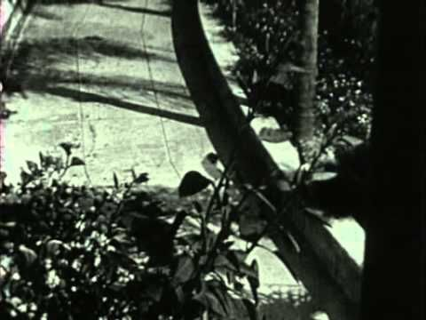 """Maya Deren (an American Avant-garde filmmaker who was first trained in the art of dance) this short film is called """"Meshes of the Afternoon"""" and every movie with double characters, every David Lynch film and any weird, mind game owes itself to this short film. It was the first of many."""