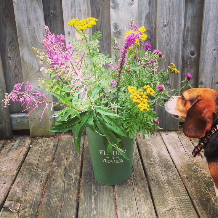 Beagle approved wildflowers