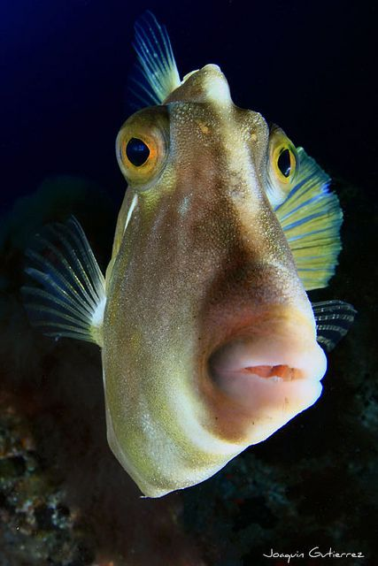 Random animal and human facial expressions to find out for Big fish in the ocean