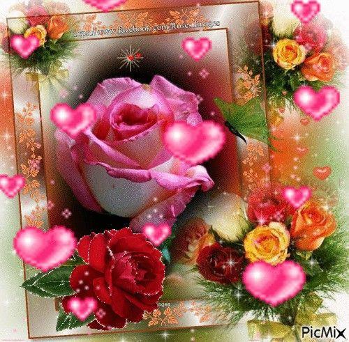 Blumen Gif, Rote Rosen, Geburtstag Sprüche, Herzchen, Geburtstage, Bilder,  Schönen Rosen, Schöne Dinge, Rosa Rosen