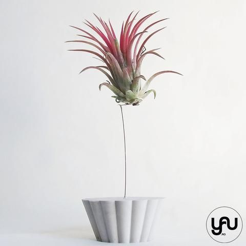 MARTURII plante aeriene in suport CUPCAKE - M38 - https://www.yau.ro/collections/marturii-nunta-si-botez?page=1 - yauconcept - elenatoader