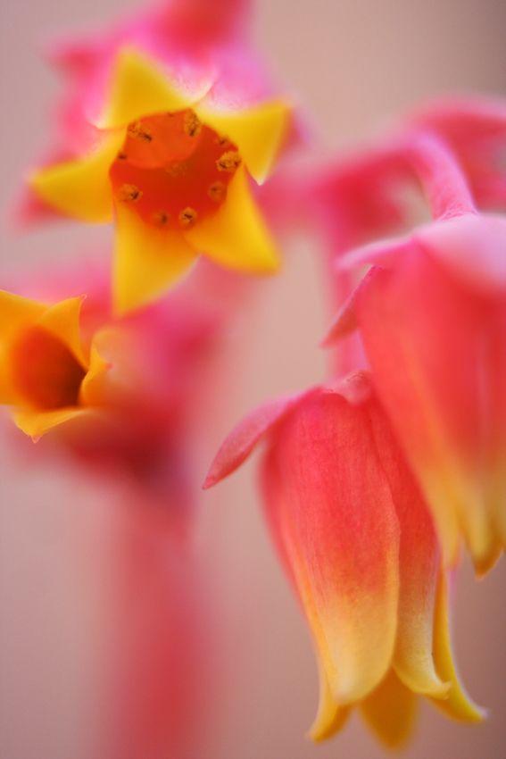 Succulent flower taken by Demi Zantides
