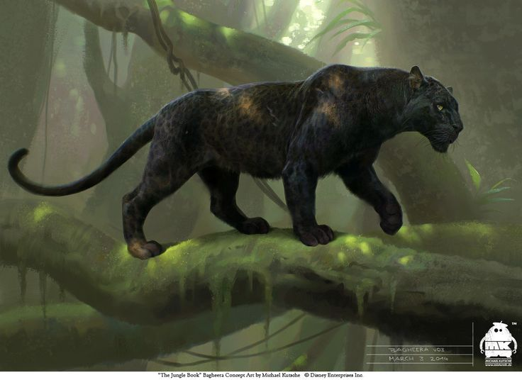 The Jungle Book: Bagheera Concept, Michael Kutsche on ArtStation at https://www.artstation.com/artwork/dgrGK