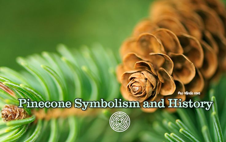 Throughout the span of recorded human history, Pinecone has served as a symbolic representation of Human Enlightenment, the Third Eye, and the Pineal Gland.