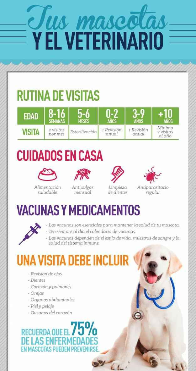De los 0 a los 9 años tu perro debe ir al veterinario, por lo menos, una vez al año.