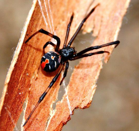 42 Best SpidersSs Images On Pinterest