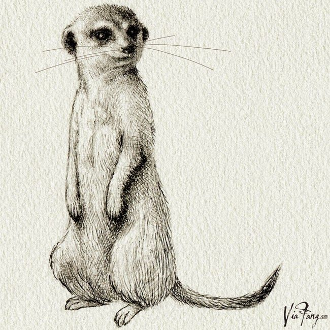 One Of The Meerkats For TRAD Philosophy 2014 Autumn/winter